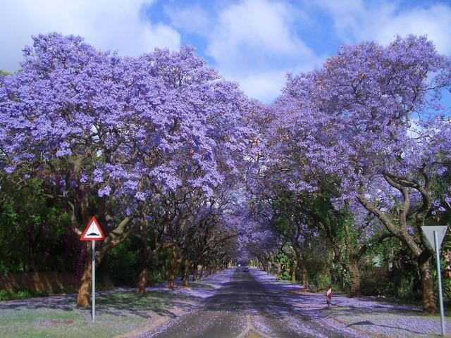 Les plus beaux arbres au monde travelercar - Les plus beaux arbustes persistants ...